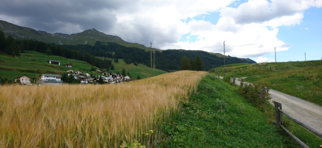 Corn field in foreground, the village of Ftan in the background