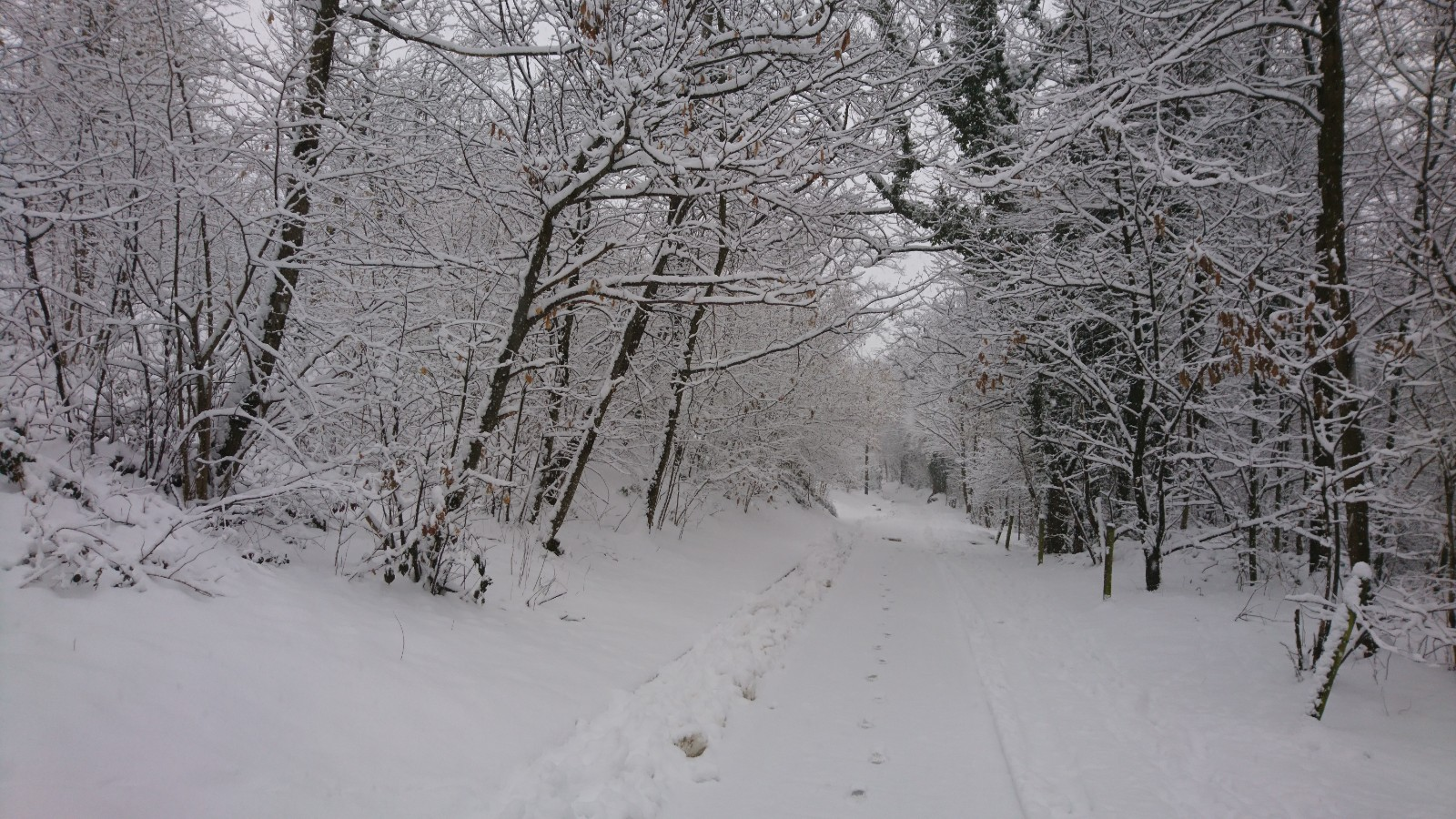A street into the woods, everything covered with snow.