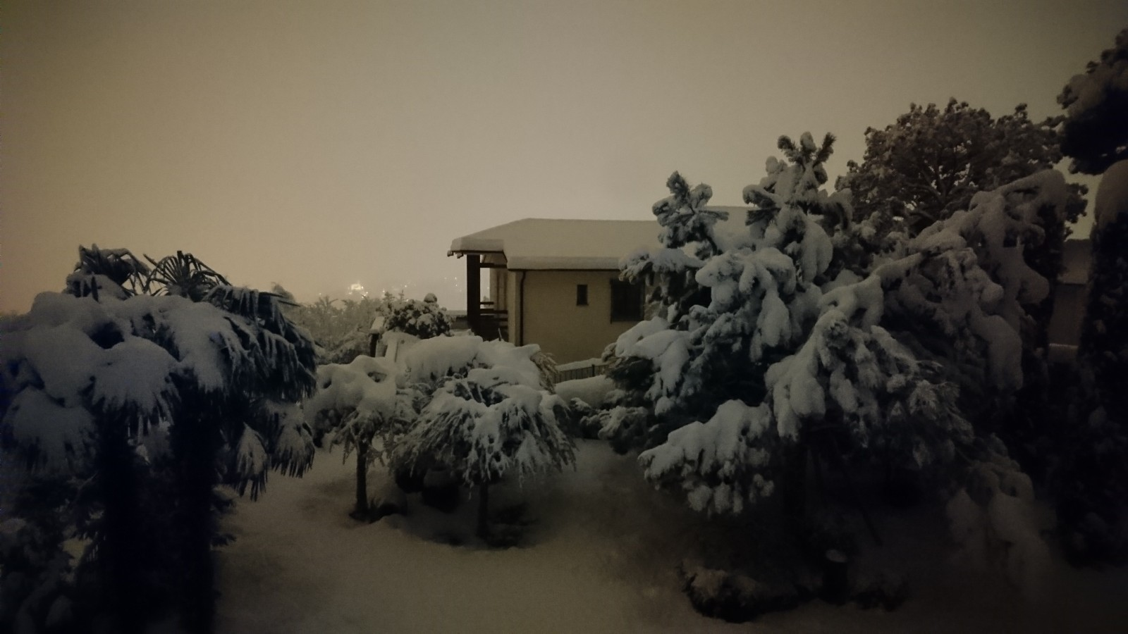 Pines, olive trees and palms covered by heavy snow. Picture taken during night time.