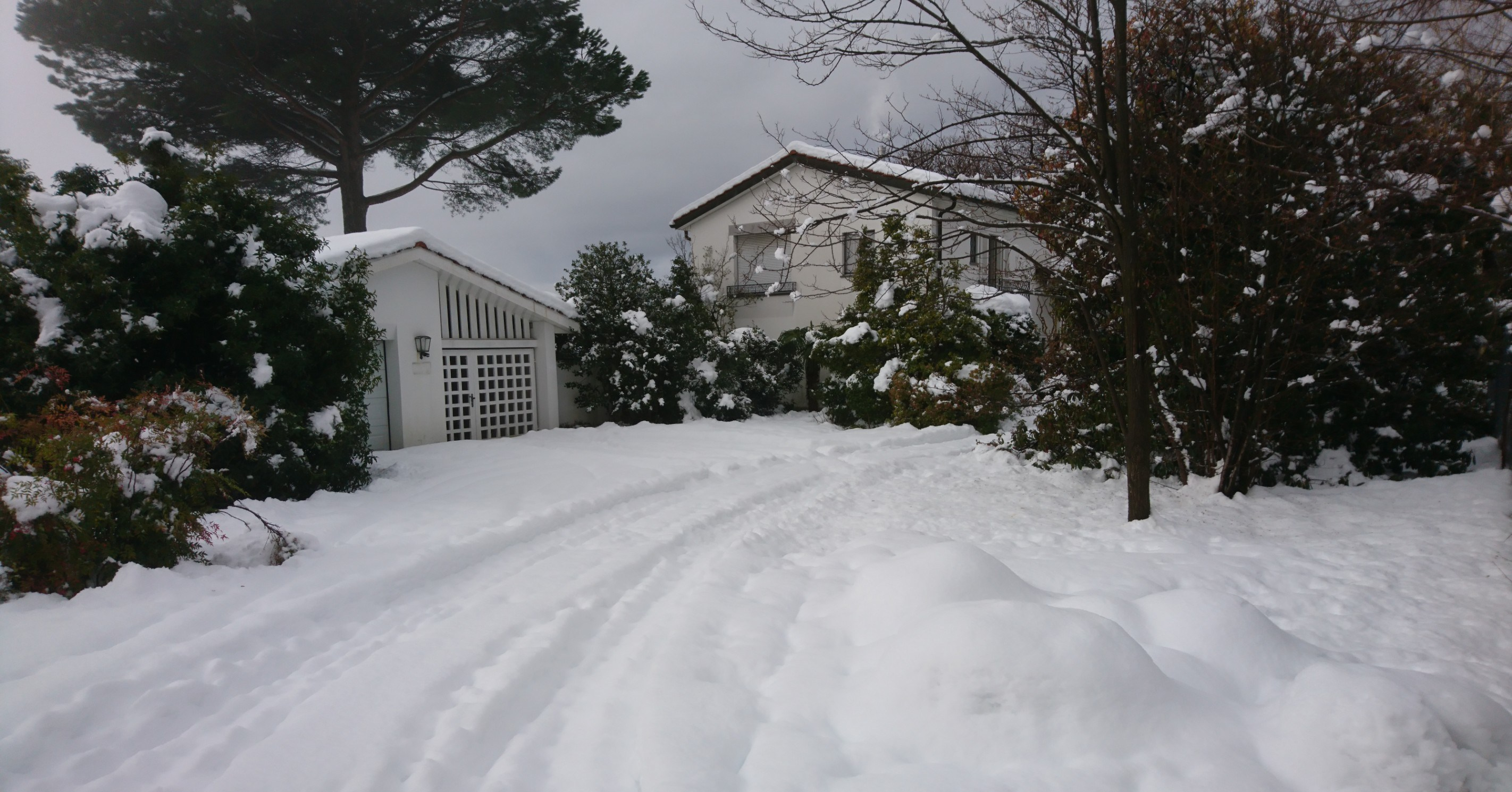 Houses, trees and street covered with snow.