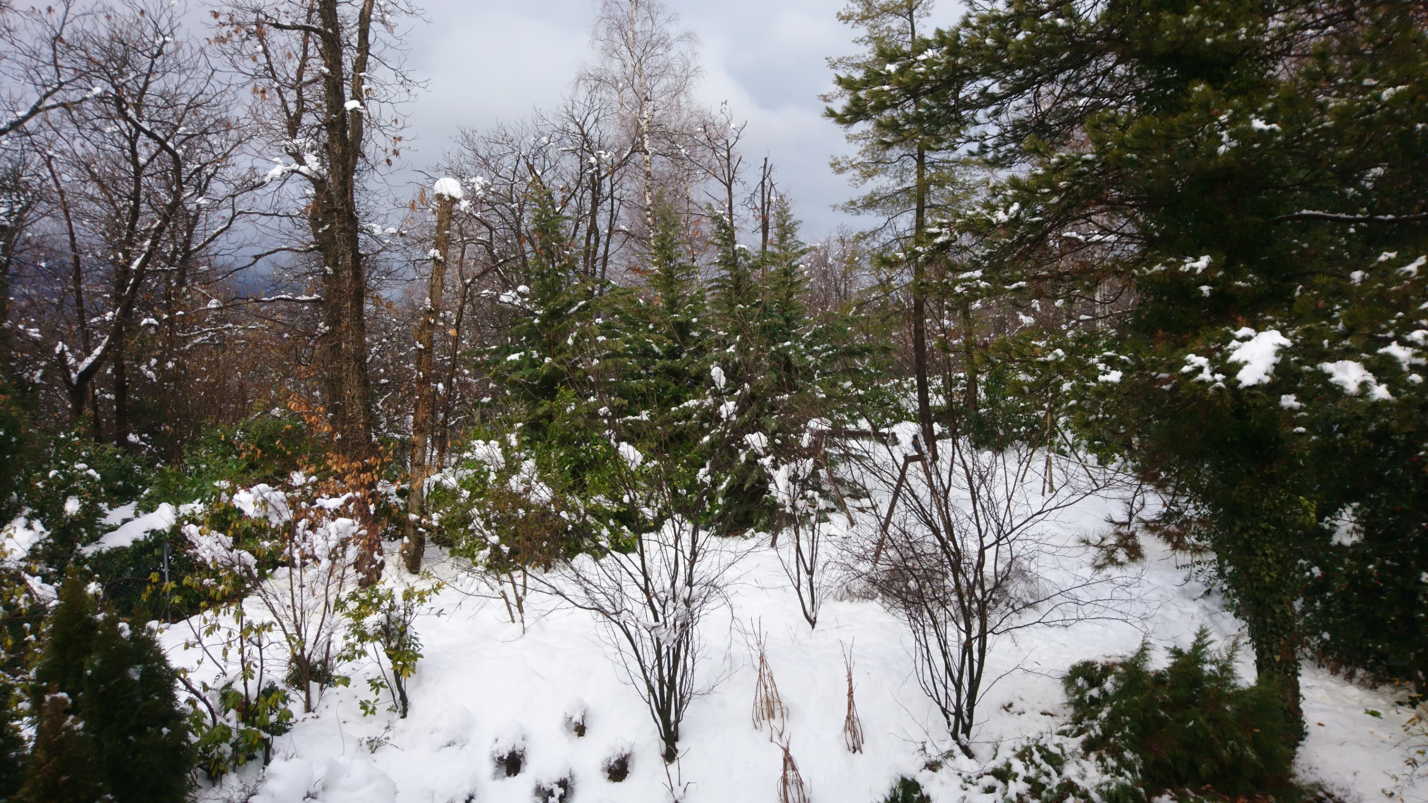 The picture shows green trees and surrounding terrain covered with snow.